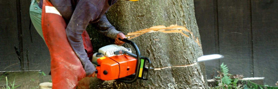 tree removal richmond va