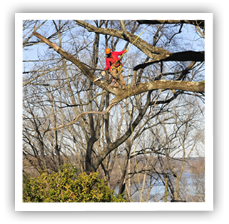 tree-service-richmond-va