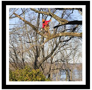 tree-service-richmond-va