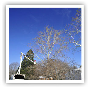 tree-service-richmond