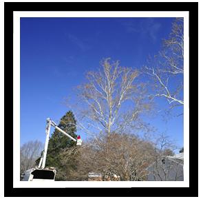 tree-service-richmond