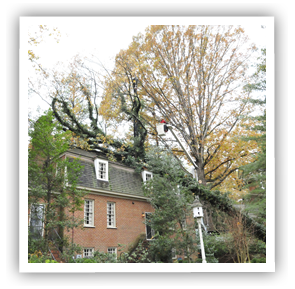 storm-damage-cleanup-richmond