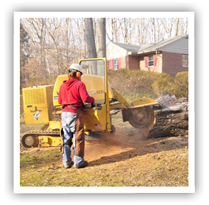 stump-grinding-richmond