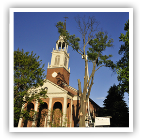 tree-removal-richmond