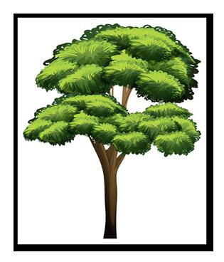 tree-risk-assessment-richmond