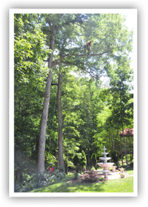 Photo Credit: Ridgeline Tree Service