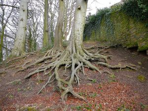 Tree roots spreading out.
