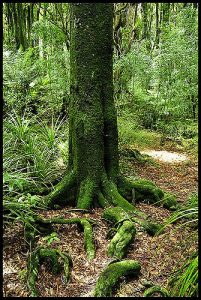 Mossy tree roots.