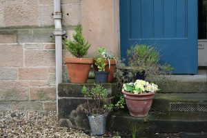 Various potted plants on a stoop.