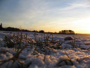 Frozen ground with snow.