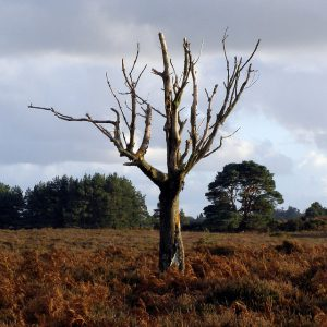 Old tree left standing.