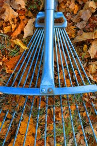 A rake amidst dead leaves.