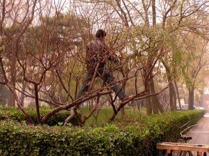Someone pruning a tree.