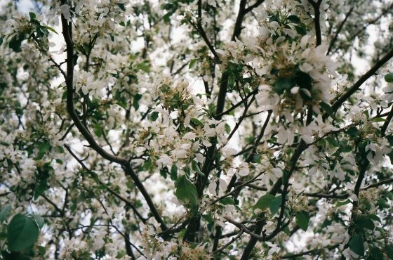 Tree in the springtime.