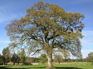 Tree in springtime.