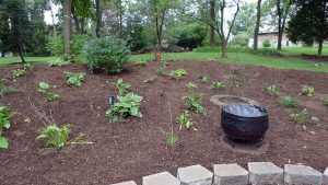 Freshly mulched garden.