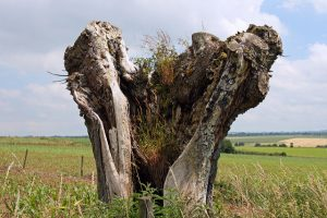 base of a dead tree