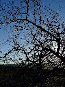 dead tree backlit